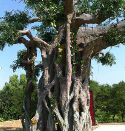 酒店水泥树制作